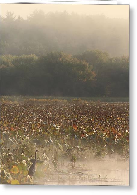 Great Meadows National Wildlife Refuge Blue Heron Fog Greeting Card by John Burk