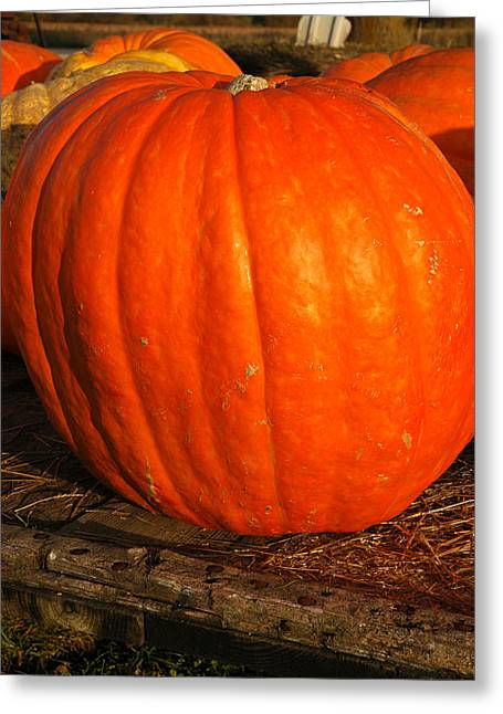 Great Orange Pumpkin Greeting Card by LeeAnn McLaneGoetz McLaneGoetzStudioLLCcom