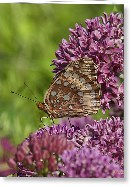 Great Spangled Fritillary Din194 Greeting Card