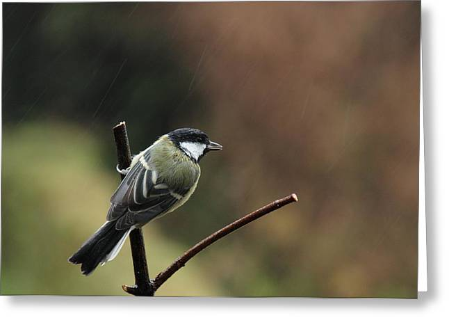 Great Tit In The Rain Greeting Card