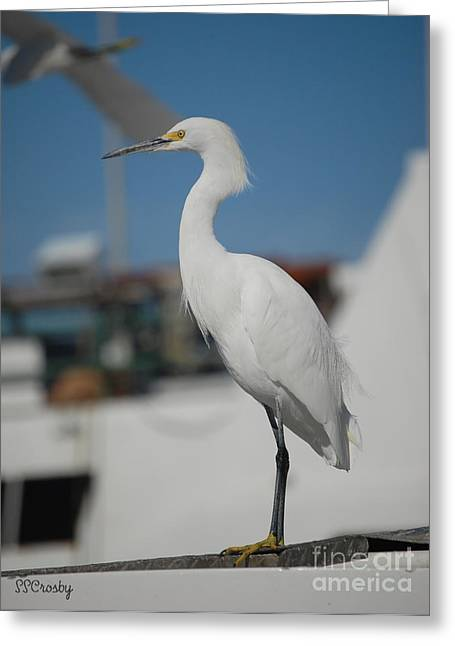Great White Egret 2 Greeting Card