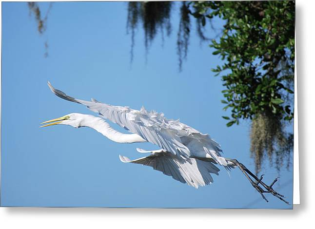 Great White Heron Greeting Card