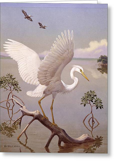 Great White Heron, White Morph Of Great Greeting Card