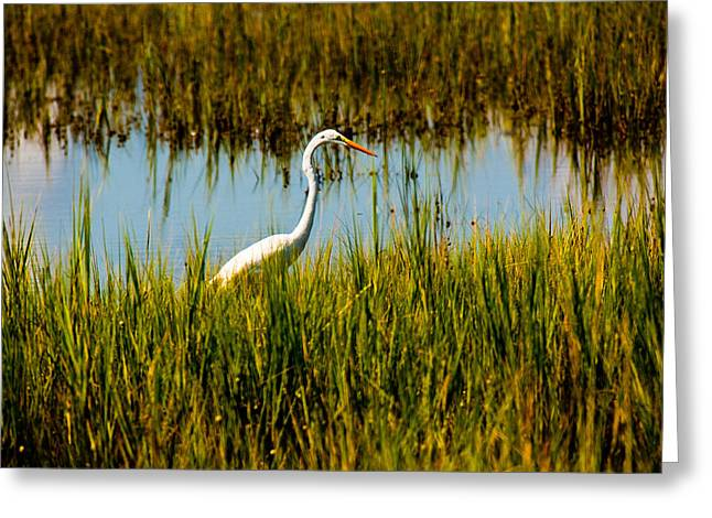 Greater Egert Greeting Card by Michael Ray