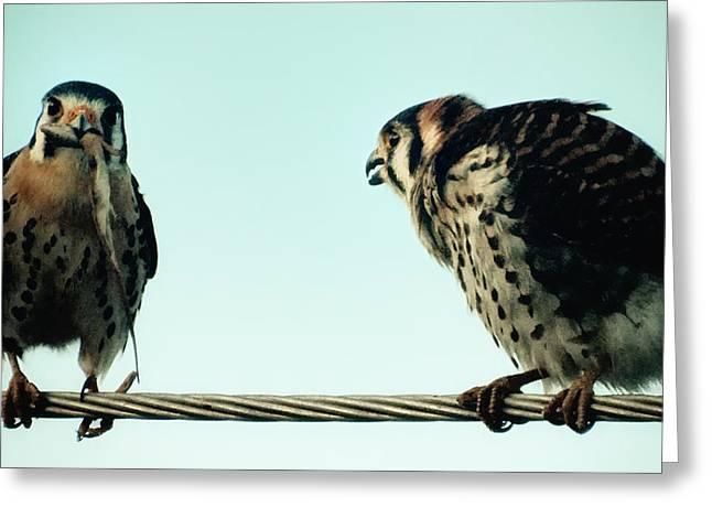 Greedy Bird Greeting Card