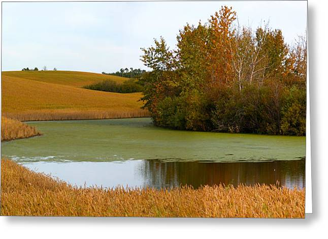 Green And Gold Greeting Card by Stuart Turnbull