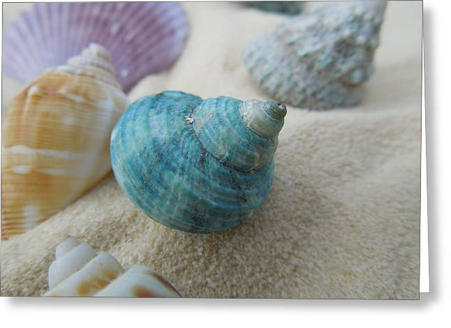 Green-blue Shell In The Sand Greeting Card by Chad and Stacey Hall