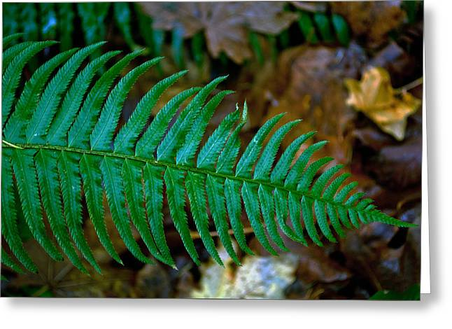 Green Fern Greeting Card by Tikvah's Hope