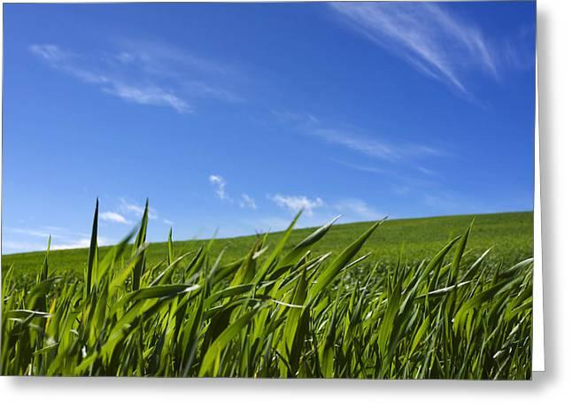 Green Field Of Wheat Greeting Card by Bernard Jaubert