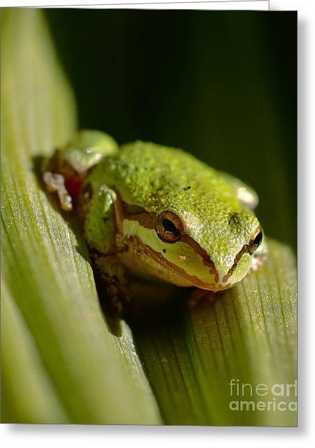 Green Frog 2 Greeting Card