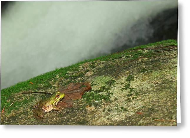 Green Frog At Waterfall Greeting Card by John Burk