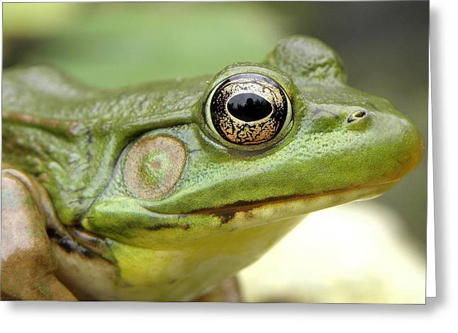 Green Frog Greeting Card by Griffin Harris