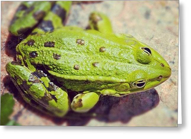 Green Frog Sitting On Stone Greeting Card