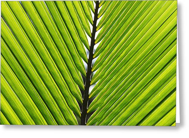 Green Fronds Greeting Card by Lauri Novak