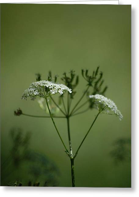 Green Garden Greeting Card by Dickon Thompson