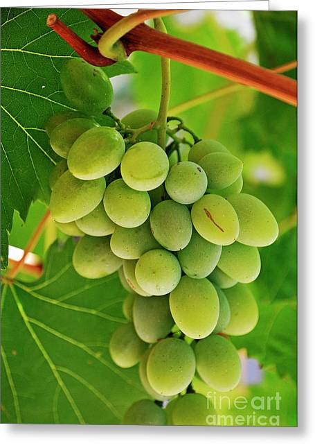 Green Grape And Vine Leaves Greeting Card by Sami Sarkis