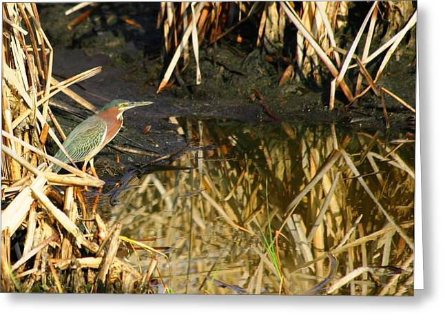 Greeting Card featuring the photograph Green Heron by Jeanne Andrews