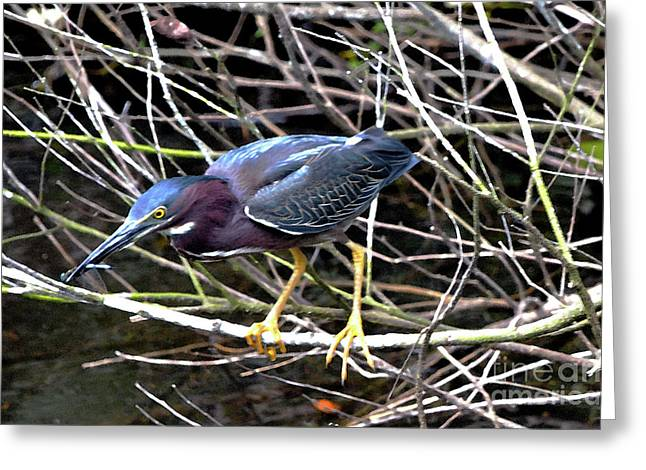 Greeting Card featuring the photograph Green Heron by Pravine Chester