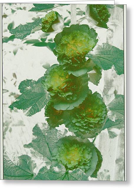 Green Hollyhocks Greeting Card