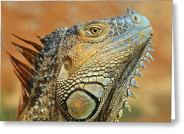 Green Iguana Greeting Card by Tony Beck