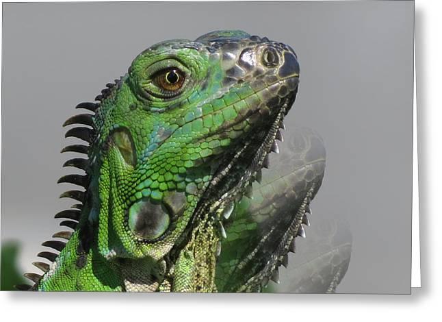 Green Iguana Triple Greeting Card by Vijay Sharon Govender