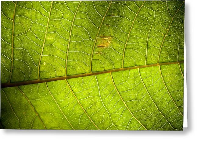 Green Leaf Background Greeting Card by Maratsavalai Lertsirivilai