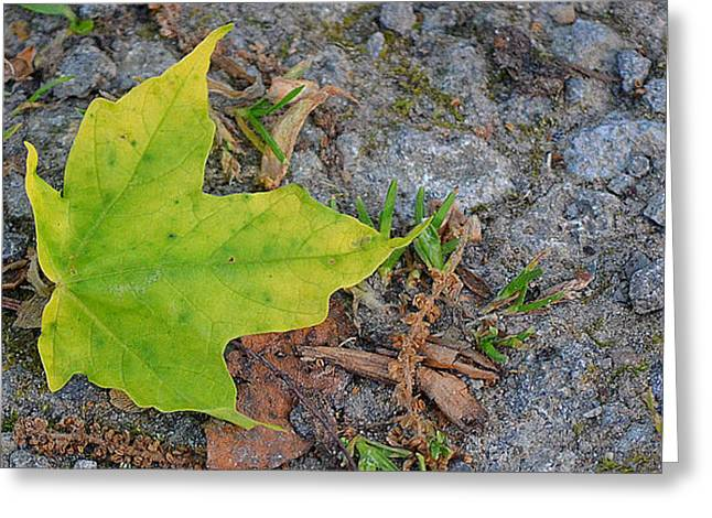 Green Leaf On Ground Greeting Card