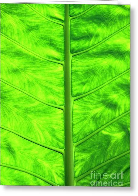 Green Leaf Greeting Card by Sami Sarkis