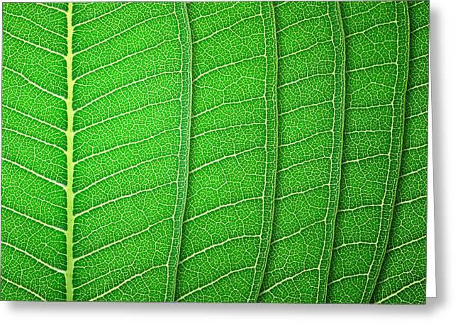 Green Leaf Texture Greeting Card by Natthawut Punyosaeng
