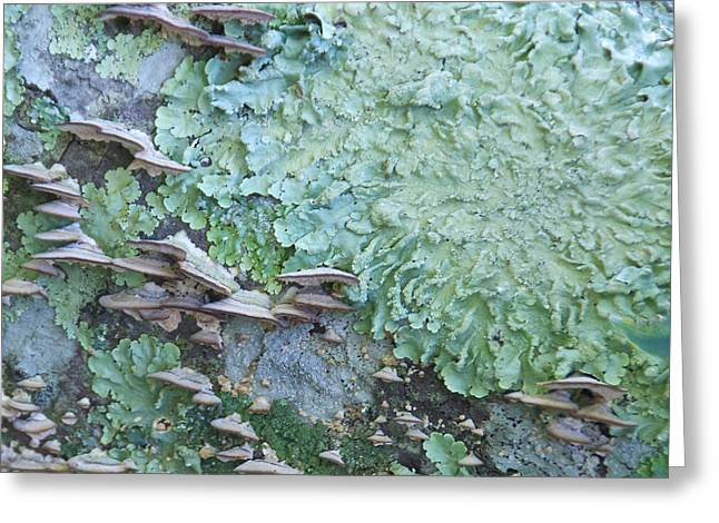 Green Mossy Fungus Party Greeting Card by Cindy Lee Longhini