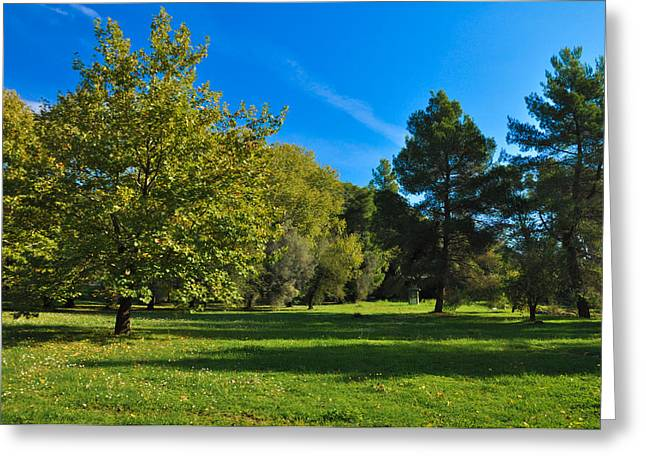 Green Oasis Greeting Card by Stavros Argyropoulos