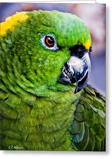 Green Parrot Greeting Card by Christopher Holmes