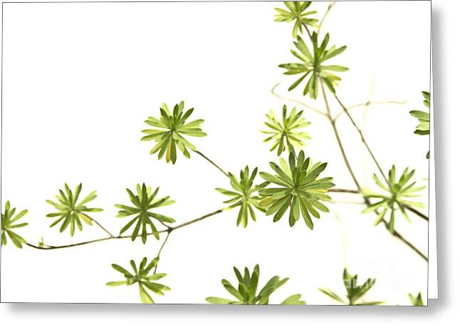 Green Plant Greeting Card by Blink Images
