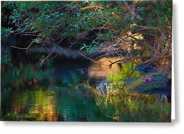 Green Reflections Greeting Card by Dorothy Cunningham