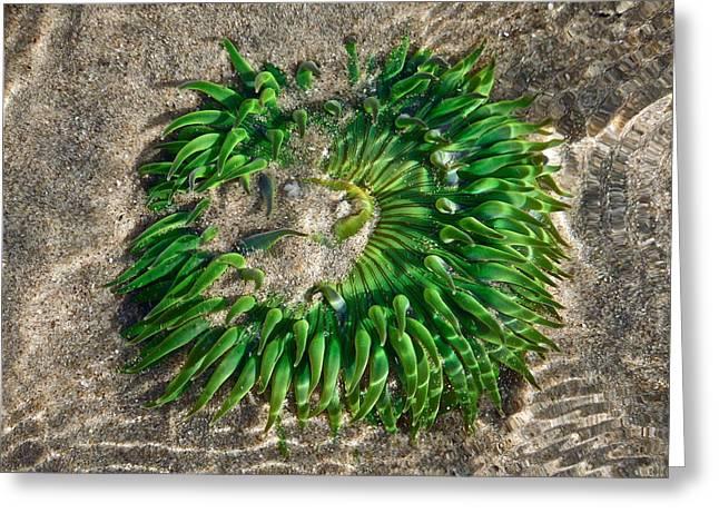 Green Sea Anemone Greeting Card