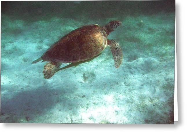 Green Sea Turtle Greeting Card by David Wohlfeil