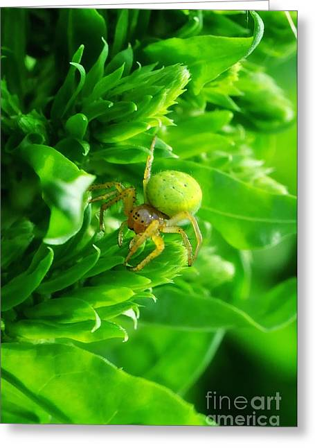 Green Spider 2.0 Greeting Card by Yhun Suarez