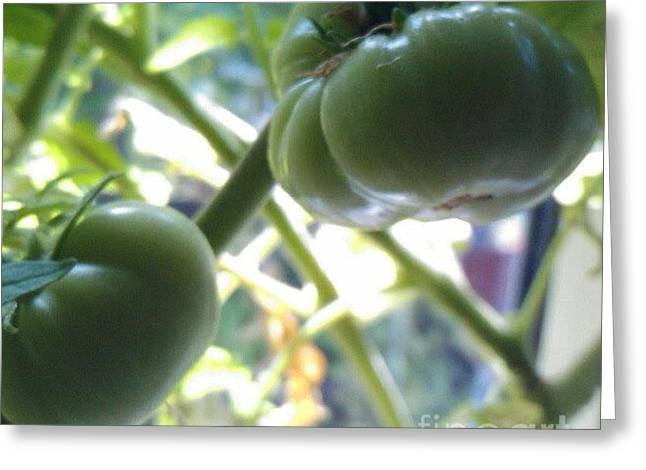 Green #tomatoes #instaprints Greeting Card