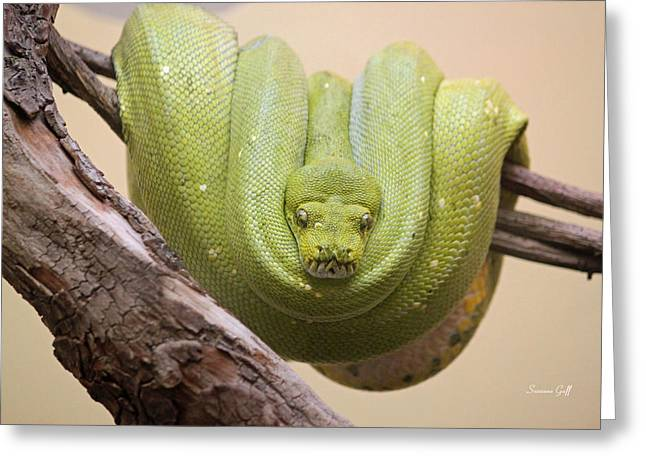 Green Tree Python Greeting Card by Suzanne Gaff
