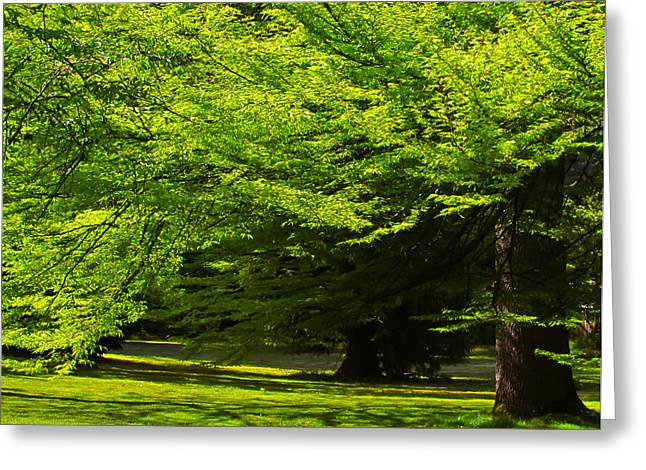 Green Trees In Stanley Park Greeting Card