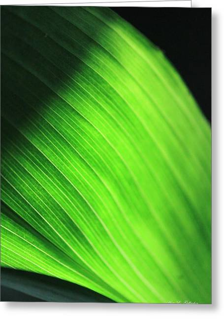 Green Wave Greeting Card