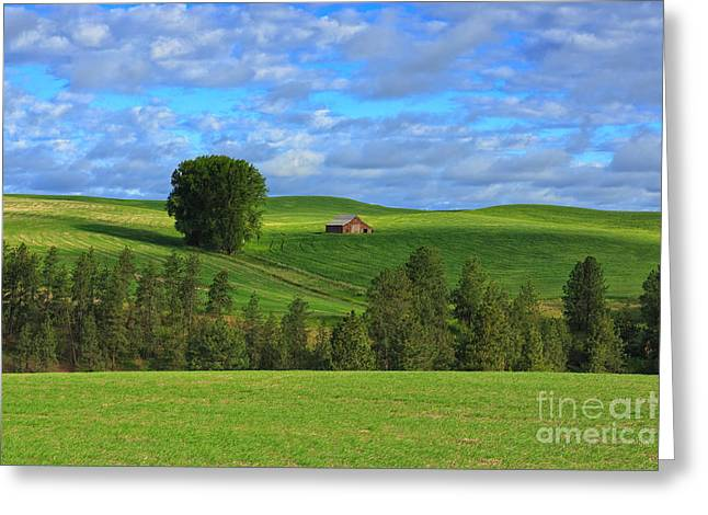 Greener Pastures Greeting Card by Beve Brown-Clark Photography