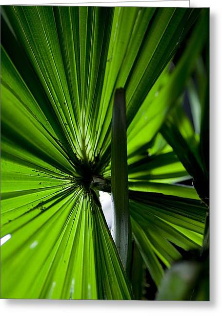Greeting Card featuring the photograph Greenery by Carole Hinding