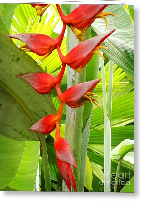 Greenhouse Heliconia Greeting Card by Stephen Mack