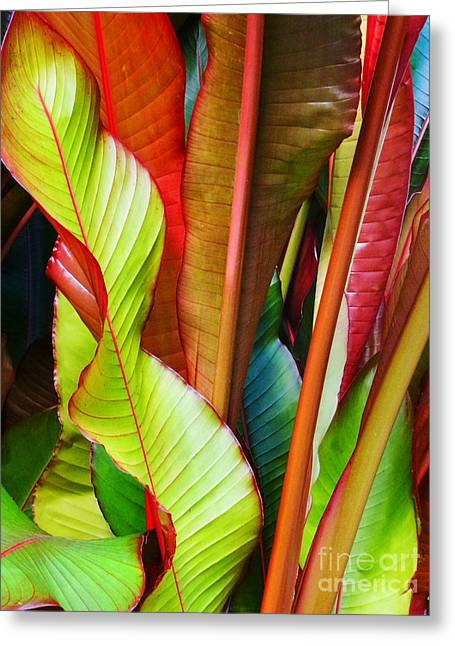 Greenhouse Palms 2 Greeting Card