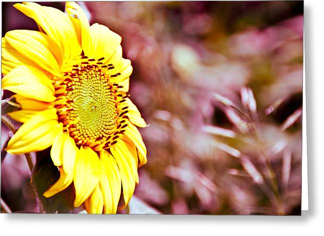 Greeting Card featuring the photograph Greeting The Sun. by Cheryl Baxter