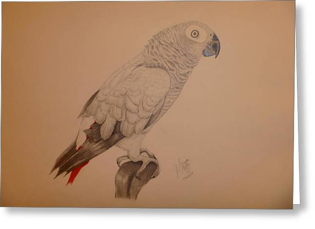 Grey African Parrot Greeting Card by Tonya Hoffe