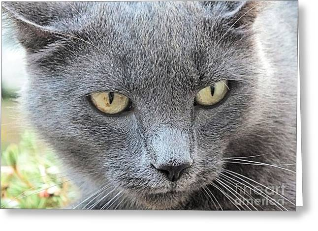 Grey Kitty 2 Greeting Card