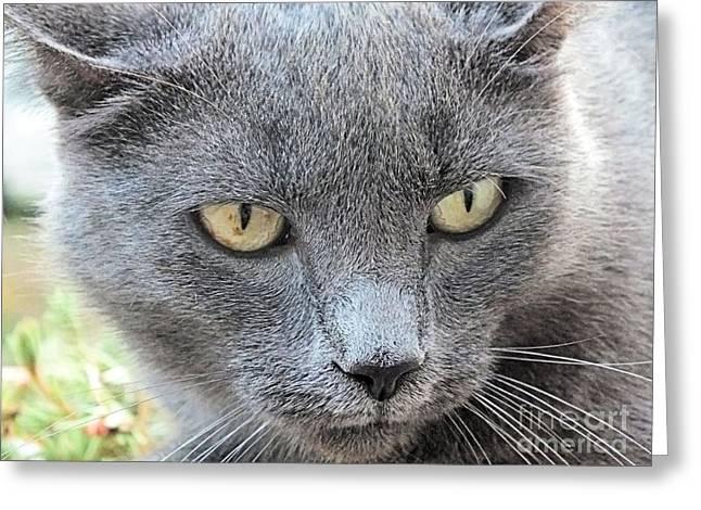 Grey Kitty 2 Greeting Card