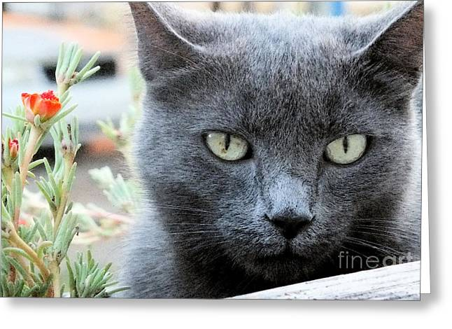 Greycat Greeting Card